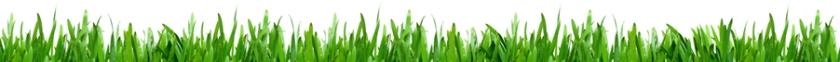 grass_divider